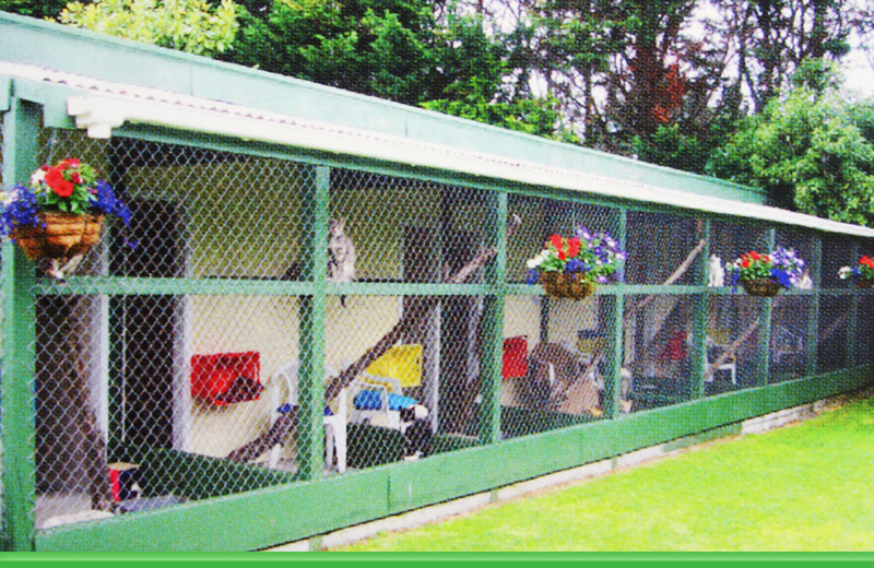 Cattery Auckland